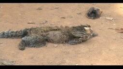 Primatas estão sendo mortos na região após casos de febre amarela