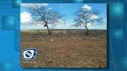 Sertão continua sem chuva em Sergipe