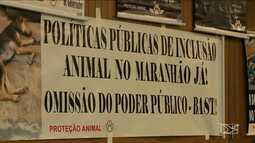 Ativistas cobram da polícia resultado das investigações sobre matança de gatos em São Luís
