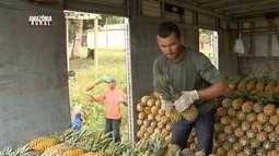Parte 1: Veja como plantio de abacaxi garante sustento de famílias no interior do AM