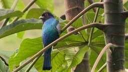 Equipe do Terra da Gente filma 64 espécies de aves no Rio de Janeiro.