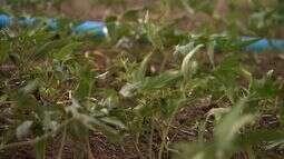 Distribuição de kits de irrigação estimula agricultores durante período de estiagem
