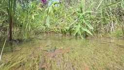 Veja as condições das nascentes de água do DF