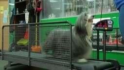 Donos de cães e gatos levam animais de estimação para fazer exercícios relaxantes em spa