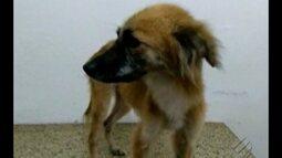 Cão trancado sem comida e água em Icoaraci foi resgatado