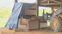 Período de restrição para retirada de madeira em RO termina