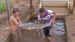 Em Dourados, piscicultores reclamam da falta de opções no mercado para vender produção