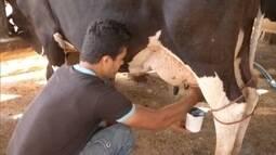 Confira o caminho percorrido pelo leite das fazendas até a casa dos brasileiros