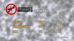 Aedes Aegypti: caem os números de dengue, zika e chikungunya em Salvador
