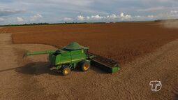 Começa colheita de soja em Santarém, Mojuí e Belterra