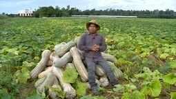 Parte 3: Confira uma viagem para conhecer uma plantação de abóboras gigantes