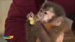 Polícia Ambiental recupera animais que seriam vendidos por traficantes