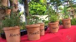 Saiba como cultivar uma horta em casa