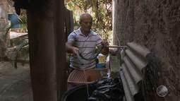 Aedes Aegypti: falta de água pode ajudar na proliferação do mosquito; entenda