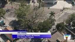 Prefeitura de São José vai cortar figueira centenária