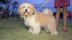 Orientações para passear com cães em locais onde há animais silvestres