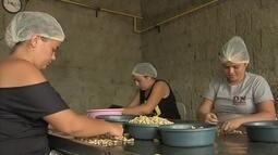 Agricultores de Chorozinho mantêm produção de cajuína em alta dutante todo o ano