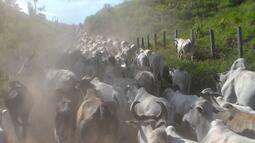 Edição completa do Mirante Rural deste domingo (11.06.17)