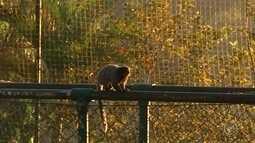 Saguis são flagrados andando em cima de alambrado de parque em Itatiba