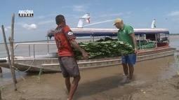 Parte 2: Acompanhe a situação de produtores e várzea da Ilha da Marchantaria