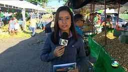 Denise Gomes apresenta as notícias policiais