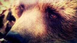 Globo Natureza: Ursos da Romênia