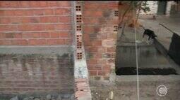 Trecho de galeria de esgoto cede e abre buraco no quintal de morador do bairro Memorare