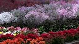 Atibaia recebe tradicional festa de flores e morangos