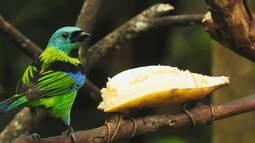 Plantas, comedouros e bebedouros trazem as aves para perto dos observadores.