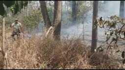 Fogo queima área do tamanho de 30 campos de futebol no Horto Florestal de Batatais