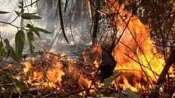 Queimadas causam prejuízos para produtores rurais da região sudoeste de Goiás