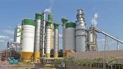 Indústria de celulose provoca revolução no setor florestal em MS