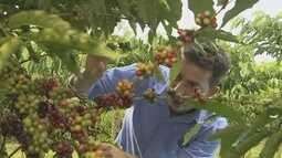 Rondônia é finalista em concurso nacional que avalia qualidade do café