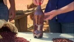 Sementes de feijão precisam ser armazenadas corretamente para germinar
