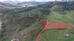 Área de extração de bauxita em MG é recuperada com mata nativa, café e pasto