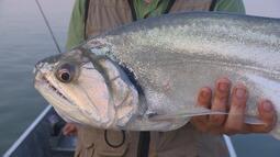 Pescaria no rio Xingu
