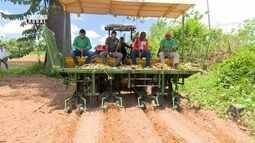 Mecanização da lavoura da mandioca aumenta ritmo de produção no AC