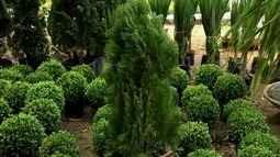 Pinheiros: veja dicas para criar e enfeitar a árvore símbolo do Natal