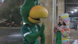 TV Goiás - A despedida do mascote Periquito