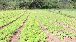Produção de hortaliças sofre redução no Centro-Oeste de Minas