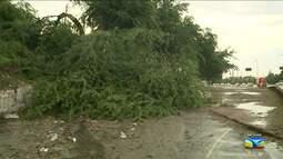 Árvore cai e impede travessia pedestres em São Luís