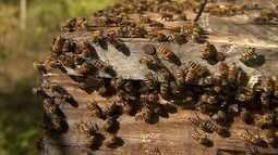 Veja como é fácil montar um apiário