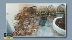 Homem é preso e dois detidos por suspeita de posse de aves silvestres, em Piracicaba