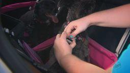 Casa Prática: passeios de carro com os pets podem ficar mais seguros