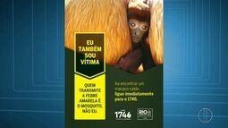 Araruama, RJ, tem primeira morte de macaco por febre amarela confirmada pelo Estado
