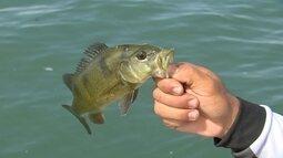 Tá para peixe!