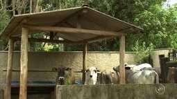 Vigilância confirma segundo caso de raiva animal em bois na zona rural de Jundiaí