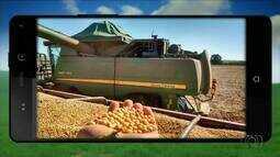 QVT do Campo: telespectadores enviam imagens da safra no estado