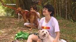 Parte 2: Cães se aventuraram no 'Zappeando'