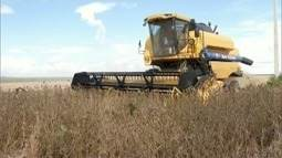 Agricultores da Chapada Gaúcha se aperfeiçoam para o aumento do cultivo da soja